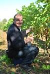 04 TC grape picking blog © 2011 Elvis Dobrescu