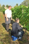 06 TC grape picking blog © 2011 Elvis Dobrescu