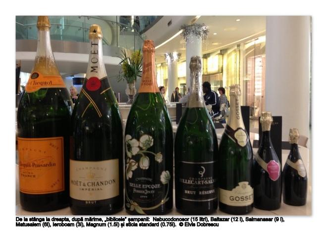 Champagne bottles blog 1 © Elvis Dobrescu