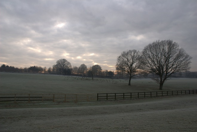 Coworth Park december © Elvis Dobrescu (10)