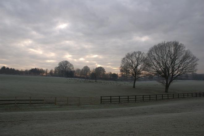 Coworth Park december © Elvis Dobrescu (10)