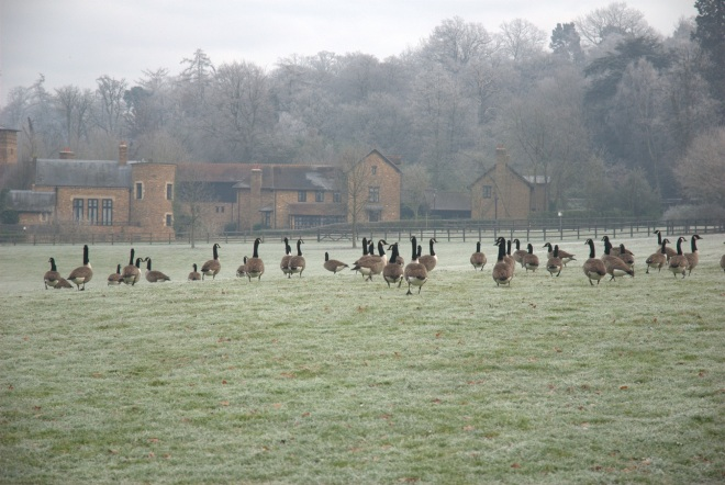 Coworth Park december © Elvis Dobrescu (19)