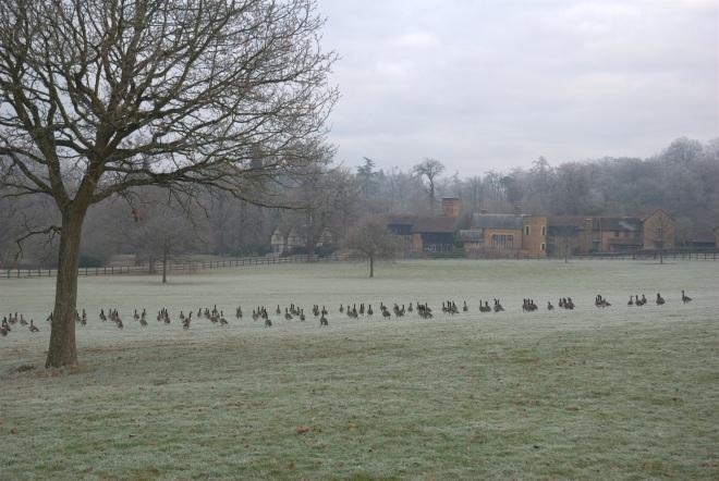 Coworth Park december © Elvis Dobrescu (20)