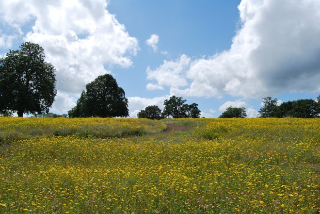 Coworth Park meadow © Elvis Dobrescu  (1)