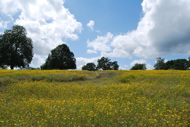 Coworth Park meadow © Elvis Dobrescu  (1)