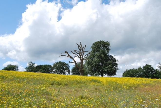 Coworth Park meadow © Elvis Dobrescu  (2)