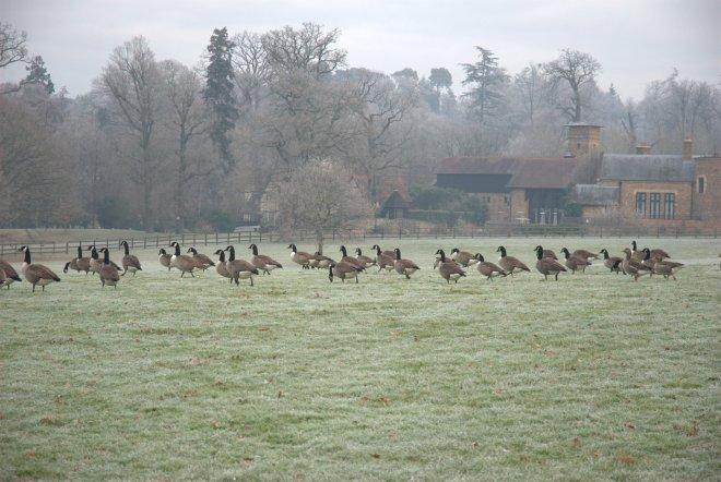 Coworth Park december © Elvis Dobrescu (18)