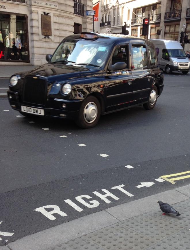 Pedestrian pigeon
