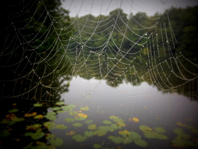 Spiders web (1)