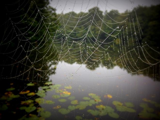 Spiders web (1)