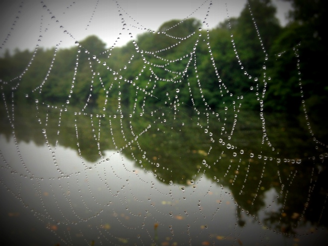 Spiders web (2)