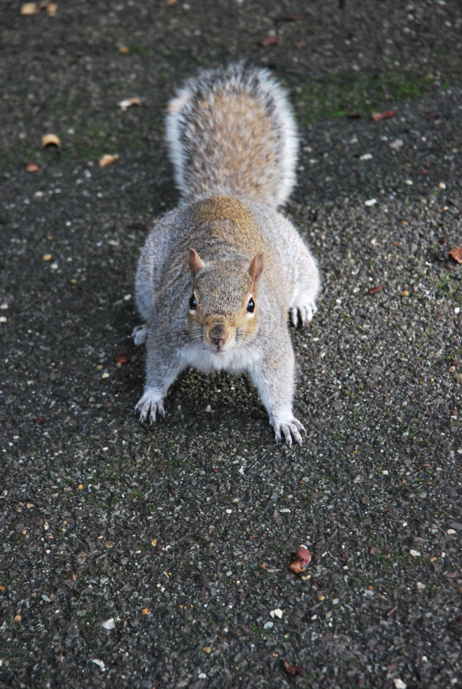 Squirrel (2)